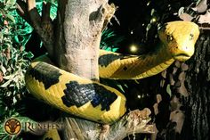 Snake Anaconda | Halloween Party Theme | Halloween Party Theming Hire | Event Prop Hire