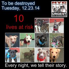 TO BE DESTROYED: 10 Dogs to be euthanized by NYC ACC- TUES. 12/23/14. This is a HIGH KILL shelter group. YOU may be the only hope for these pups! ****PLEASE SHARE EVERYWHERE!