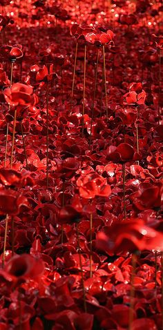 An Incredible Bird's Eye View Of The Ceramic Poppies Outside The Tower Of London