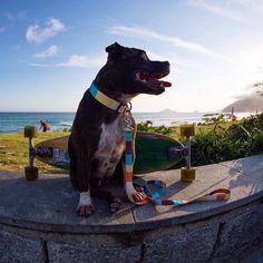 Coleira e Guia Cachorro Tchucoo Califórnia. #guiacachorro #cachorro #filhode4patas #maedecachorro #paidecachorro #coleira #petmeupet #petshop