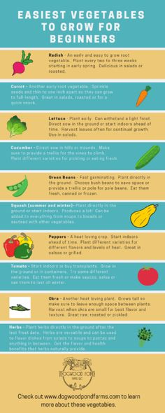 Easy to Grow Vegetables: Try these Vegetables in Your Garden - Garden Care, Garden Design and Gardening Supplies
