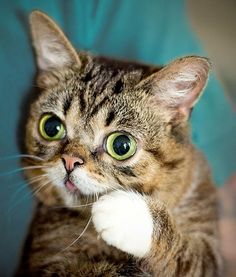 Lil' Bub: can you keep a secret?