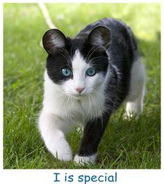 Cat with Panda Ears... RARE