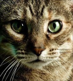 Most Beautiful Cats Photos On StumbleUpon 2 Most Beautiful Cat Pictures On StumbleUpon