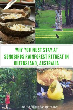Are you looking for a relaxing hotel in Queensland Australia? If so, you have to check out the Songbirds Rainforest Retreat in Queensland Australia. It is a beautiful hotel in a rainforest and is so peaceful. Come see why we love this Queensland retreat so much and why you should go visit. Don't forget to save this to your travel board. #queensland #australia #songbirdsrainforestretreat