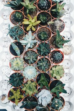 succulents in the window sill
