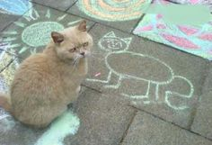 Cat unimpressed by chalk portrait...
