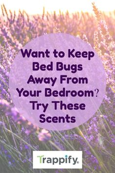 Bed bugs cause harm to you and your family. In this article, we will discuss what scent keeps bed bugs away and work well for your bedroom. Peppermint Plants, Peppermint Leaves, Indoor Vegetable Gardening, Organic Gardening Tips, Hanging Plants, Indoor Plants, Signs Of Bed Bugs, Bed Bugs Treatment, Bed Bug Bites