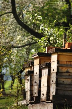 Bee hives - homes for honey.but only if the bees approve! Bee hives - homes for honey. Country Life, Country Living, Cottage Living, Country Style, Bee Skep, Bee Hives, Hive Home, Bee Farm, Bee Happy