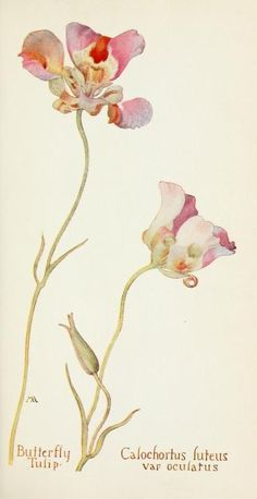 """""""Field book of western wild flowers"""" by Margaret Armstrong 1915"""