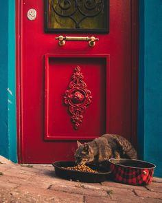 Cat in İstanbul by Ömer Yeşilırmak. #turkey #türkiye #istanbul #kedi #cat #kitten #red #door