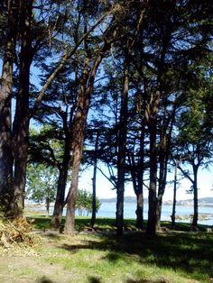 bebeteca. Galicia: Arboles y mar.