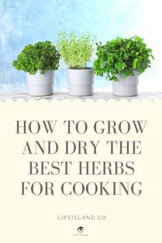 Read about How to Grow and Dry the Best Herbs for Cooking and get useful information about it at Life Island by AMBRO Gardening For Beginners, Gardening Tips, Indoor Gardening, Vegetable Gardening, Fresco, Cooking With Fresh Herbs, Growing Herbs, Health And Wellbeing, Organic Recipes