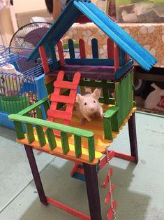 Pet mouse enjoying his new playhouse :) Hamster Diy Cage, Diy Hamster Toys, Hamster Life, Hamster Habitat, Hamster House, Pet Rodents, Pet Rats, Diy Mouse Toys, Diy Rat Toys