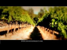 The Napa Wine Project seeks to personally visit, taste with, and promote all wineries, collectives, and commercial wine producers in the Napa Valley in order to create an educational resource for both consumers and trade. We have reviewed over 700 commercial Napa wine producers to date, physical and virtual, out of more than 1,000 total. (aff. w/DavesTravelCorner.com)