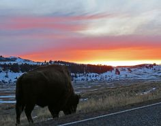 Image by Kathy Vukasovich | Yellowstone National Park    Such a cool place! Need to see more of it! Next time! @Meg White