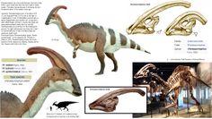 Parasaurolophus  genus