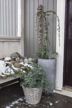 Bilderesultater for sedertre hageland Concrete, Backyard, Nature, Plants, Gardening, Christmas Decorations, Patio, Naturaleza, Lawn And Garden