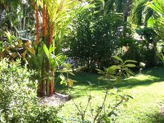 More of the back garden