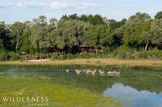 Tubu Tree Camp - A mosaic of interconnecting diverse habitats, ranging from dry Kalahari sandveld to mopane and riverine forest edging on permanent waterways, ensures diverse and spectacular game viewing. #Safari #Africa #Botswana #WildernessSafaris