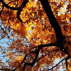#Autumn :D ♡