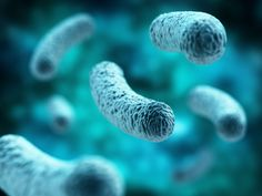 Volunteers are being sought for a major study to help determine how the gut microbiome can be used to treat multiple sclerosis, lupus, and other diseases.What if your gut flora was actually a healing … Colon Health, Gut Health, What Is Stem, Cord Blood Banking, Best Probiotic, Stem Cell Therapy, Gut Microbiome, Gut Bacteria, Autoimmune Disease