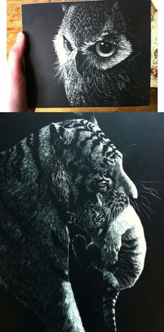 Scratchboards (Amazing.. Caught the perfect lighting too)