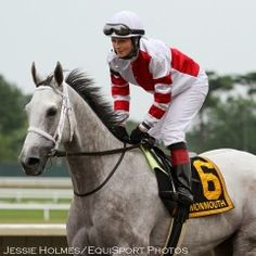 Grade 1 Winner Joyful Victory - by Tapit out of Wild Lucy Black by Wild Again