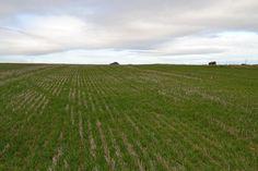 Resultado de imagen de cultivos secano andaluz