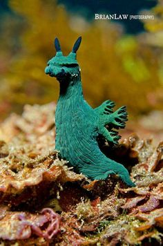 i have no idea what this lil sea creature is but he must be part of what inspires fantasy creatures! Beautiful Sea Creatures, Deep Sea Creatures, Cute Creatures, Animals Beautiful, Fantasy Creatures, Water Animals, Animals And Pets, Sea Slug, Underwater Creatures