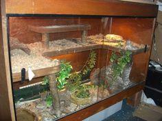 reptile tanks Reptile Tanks For Bearded Dragons Lizard Habitat, Reptile Habitat, Reptile Cage, Reptile Enclosure, Reptile Tanks, Reptile Room, Bearded Dragon Vivarium, Bearded Dragon Enclosure, Bearded Dragon Habitat