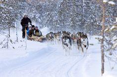 冬のラップランドは、雪と氷のワンダーランド。どこまでも続く雪と氷の世界で体験する多彩なアクティビティ。