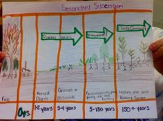 Primary & Secondary Succession Activity