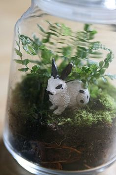 How to make a mini terrarium - I'm going to this in a jar lamp!