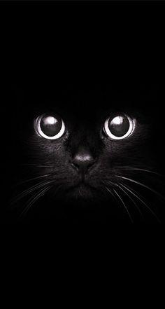 Black-Cat-Staring-Eyes-.jpg 740×1,384 pixels