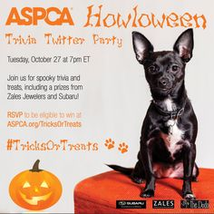 Join our Howloween trivia party next Tuesday for the chance to win big prizes from Zales and Subaru! https://www.aspca.org/form/tricks-and-treats?ms=so_def_201510&initialms=so_def_201510&utm_medium=social&utm_campaign=shareable&utm_source=201510