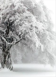 Of winter's lifeless world each tree Now seems a perfect part; Yet each one holds summer's secret Deep down within its heart. ~Charles G. Stater.