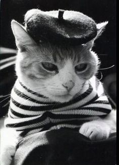 A collection of cats in costume, kitties wearing clothes, and other feline anthropomorphism! Cool Cats, I Love Cats, Crazy Cat Lady, Crazy Cats, Chat Paris, Paris Cat, Gatos Cool, Animal Gato, Photo Chat