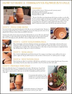 Native Seeds/SEARCH - How to Use Olla Irrigation