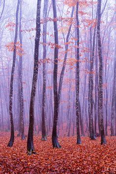trees; makoto shukawa