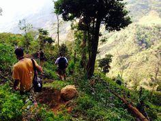 Forging a new path to Chirripo http://www.ticotimes.net/l/vivan-los-apuntados-forging-a-new-path-to-chirripo