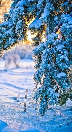Winter scenes ...                                                                                                                                                                                 More
