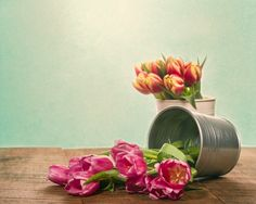 Silver container with fresh pink and mixed tulips. Fine Art Still Life Photography Print for Home Decor Wall Art. Silver metal container of fresh cut pink tulips. Still life of fresh tulip flowers. ~~ SELECT DESIRED SIZE USING THE OPTIONS BUTTON ABOVE ADD TO CART. Available in: 5x7, 8x10, 11x14, 12x18, 16x24, 20x30, 24x36 prints.