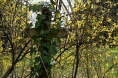 Friedhof Lindener Berg (60)