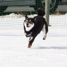 みか 雪を蹴散らして。  PetSmile