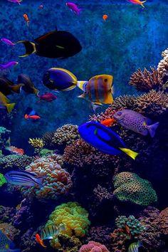 koraalrif met vissen op bodem in oceaan!!!