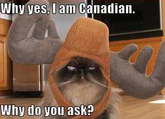 Grumpy cat is Canadian!!!