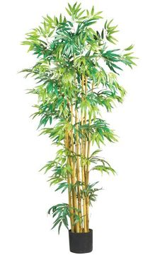 Nearly Natural 5179 Bambusa Bamboo Silk Tree, 5-Feet, Green *** Want additional info? Click on the image.