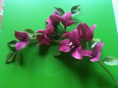 Bougainvillea. Edible art