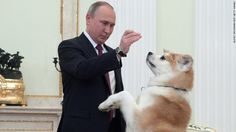 President Putin took the Akita dog who was awarded from Japan to a press conference |プーチン大統領、日本から贈られた秋田犬を連れて会見に